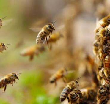 Bees, Wasps & Hornet Control
